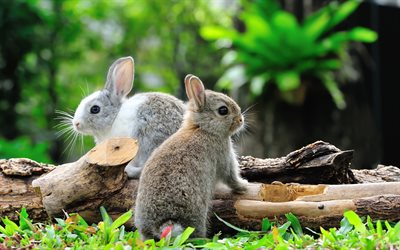rabbits, cute animals, gray rabbits, forest, forest dwellers, little rabbits