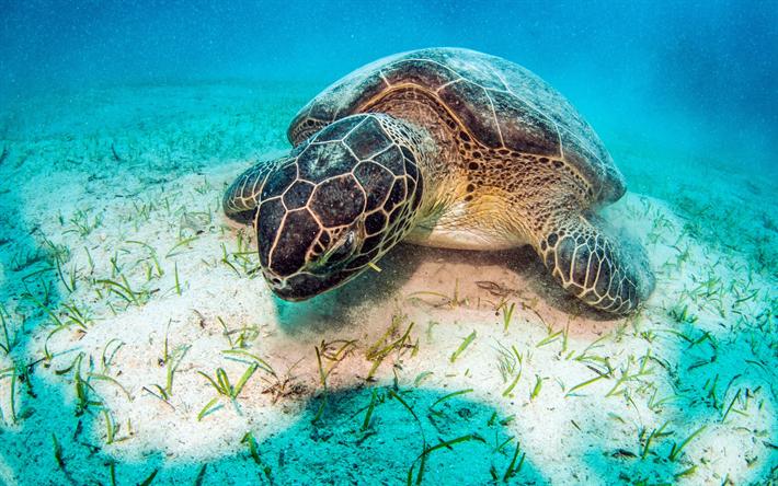 underwater world large coral reef