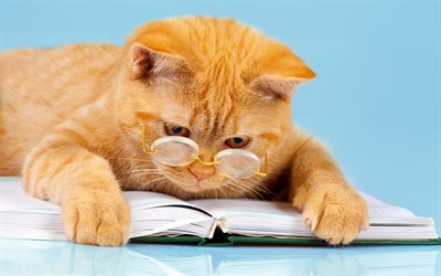 red cat, education concepts, scientist, pets, science concepts, clever cat