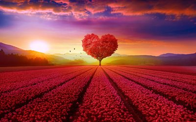 red heart tree, tulips field, pink tulips, background with heart, creative love concepts, blue sky