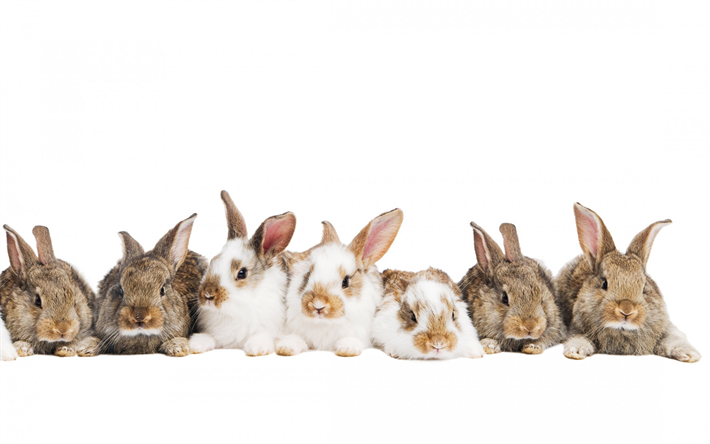 rabbits, family, cute animals, bunny on a white background, Easter