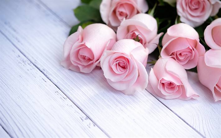 pink roses, a bouquet of roses, pink rose petals, flowers on white boards, white wooden background, beautiful flowers, roses