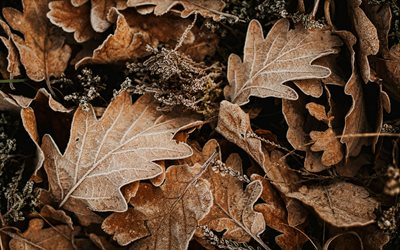4k, brown leaves background, macro, leaves textures, autumn textures, leaves patterns, autumn leaves, background with leaves, brown backgrounds