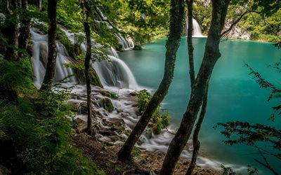 beautiful lake, forest, mountain lake, jungle, beautiful blue lake, green trees