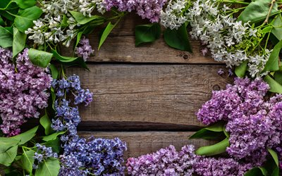lilac frame, 4k, wooden background, floral frames, lilac, spring flowers, frames