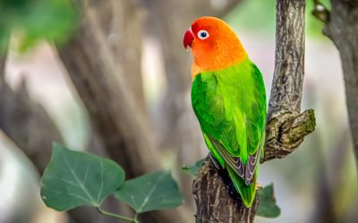 red-green parrot, beautiful bird, green parrot, parrot on a branch, Eclectus parrot