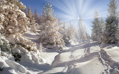 winter, mountains, snow, forest, sun