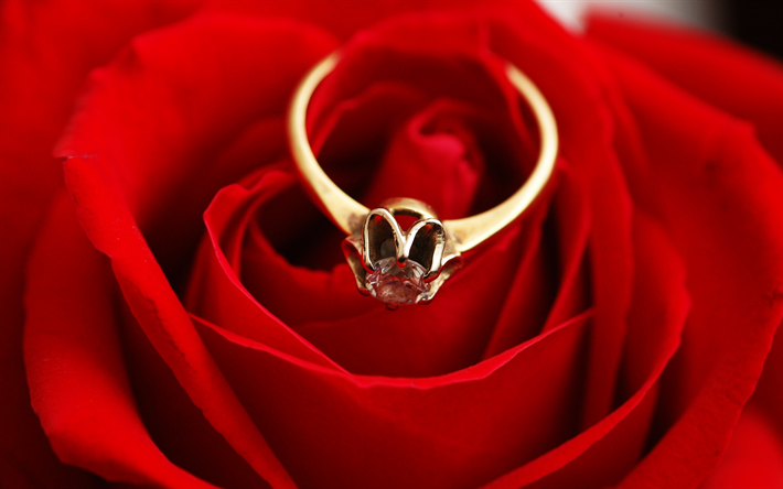 closeup edit shutterstock water with wedding image of stock taken rose drops rings now red in set photo