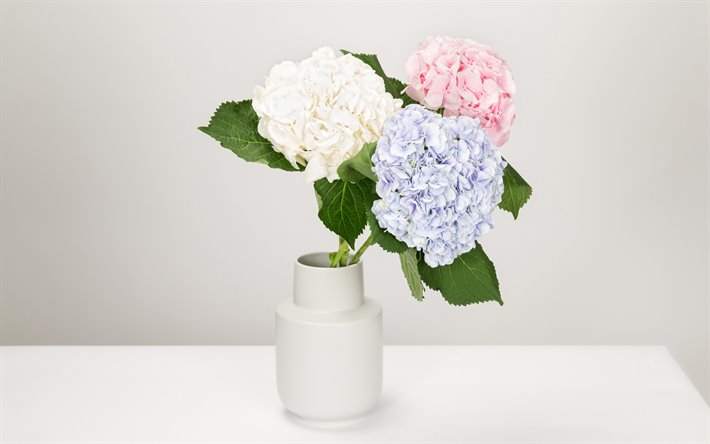 Download Wallpapers Hydrangea White Vase With Flowers Hortensia Beautiful Bouquet Blue Hydrangea Pink Hydrangea White Hydrangea For Desktop Free Pictures For Desktop Free