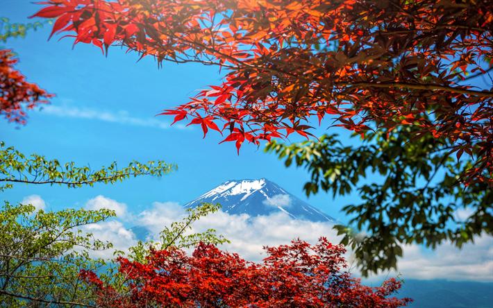 Scarica sfondi Giappone, il Monte Fuji, Honshu, autunno, stratovulcano,  paesaggio di montagna, giallo alberi, la montagna più alta del Giappone per  desktop libero. Immagini sfondo del desktop libero