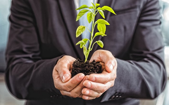 green sprout in the hands, Growth concepts, investment concepts, businessman, business people, green sprout
