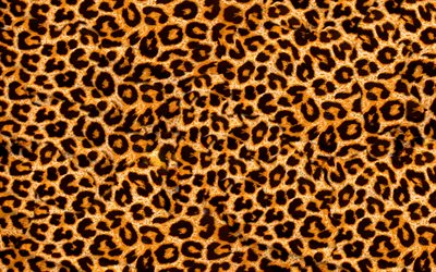 leopard skin texture, 4k, macro, brown blots texture, leopard skin, leopard background, leopard wool, leopard leather background