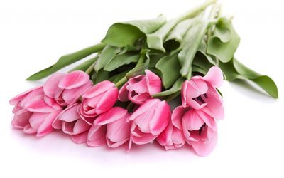 tulips, pink flowers, spring flowers, bouquet of tulips, pink tulips