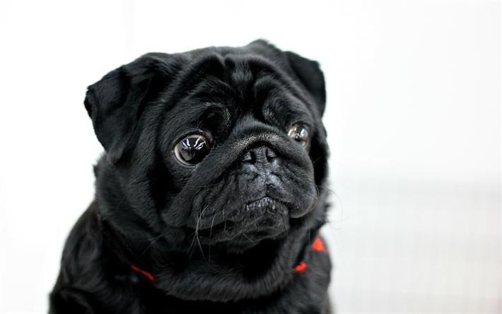 Black White Male Dog Names