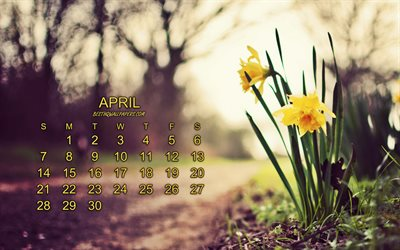 Calendar for April 2019, yellow spring flowers, April, crocuses, spring, 2019 April Calendar, 2019 concepts, 2019 calendars