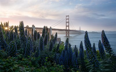 Golden Gate Bridge, pont suspendu, la baie de San Francisco, matin, lever du soleil, côte, San Francisco, Californie, USA