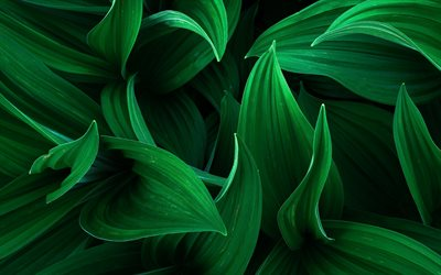 green 3d leaves, grass, eco concepts, plants, leaves