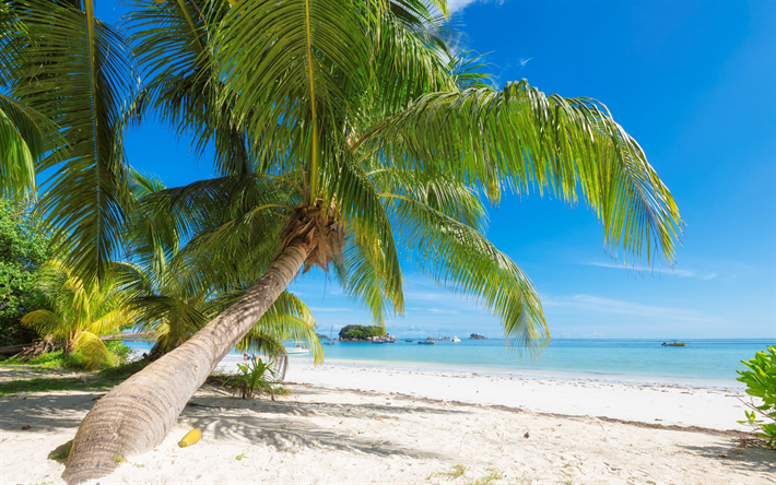 Tropical Island Beach Ambience Sound: Download Wallpapers Palm, Tropical Island, Maldives