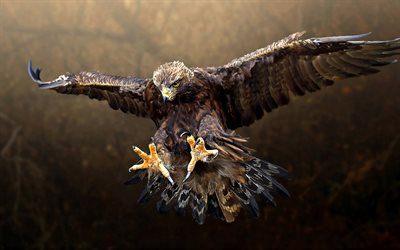 flying eagle, bokeh, predatory bird, wildlife, predators, eagle, Accipitridae
