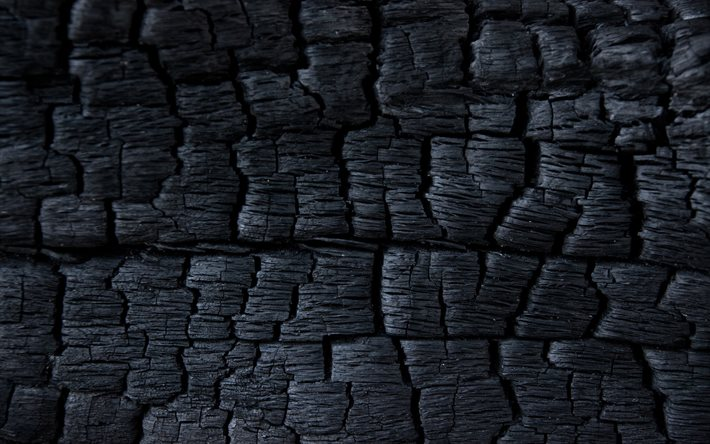 charred tree, macro, burnt tree, burnt wooden textures, charcoal textures, grunge backgrounds, black wooden texture, charcoal