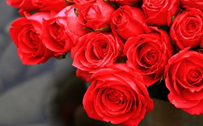 red roses, buds, close-uo, roses, bouquet of flowers