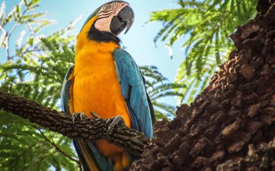 4k, Macaw, tree, parrots, jungle, wildlife, colorful parrots, Ara