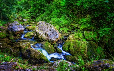 Muggendorf, 4k, HDR, forest, beautiful nature, stream, moss, Austria, Europe