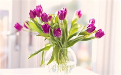 tulips, bouquet of tulips, purple tulips, vase with flowers