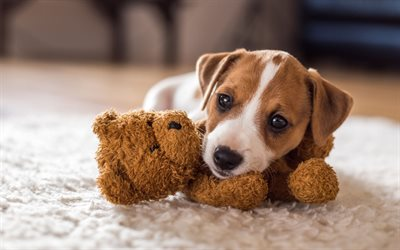 beagle, pets, puppy, beagles, cute animals, dogs