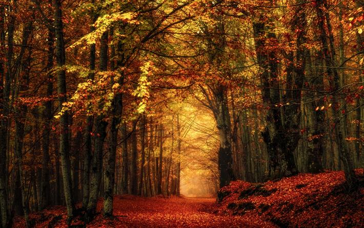 foto de Télécharger fonds d'écran l'automne, les feuilles mortes, parc ...
