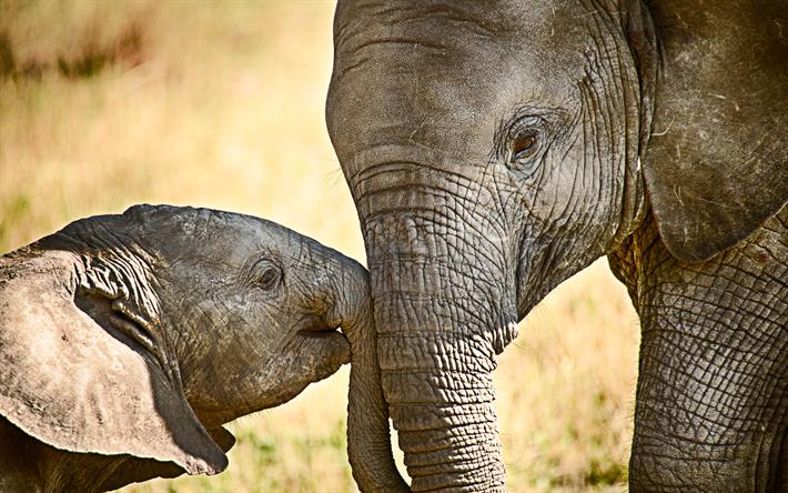Telecharger Fonds D Ecran Petit Bebe Elephant La Maman Et