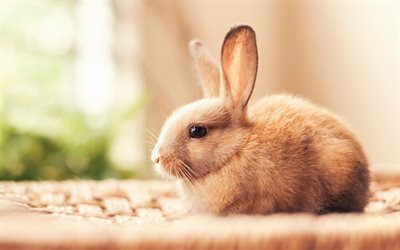 bunny, cute animals, rabbit, brown bunny