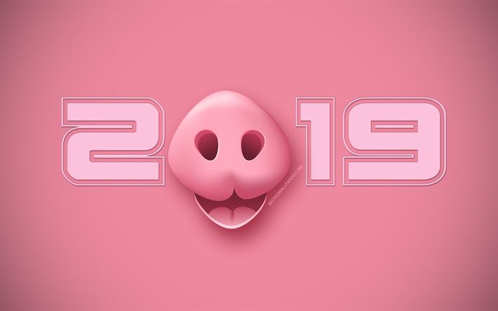 Download wallpapers 2019 pig background, Happy New Year 2019
