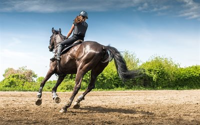 Horse, Competition, Equestrian, Running, Riding, Equestrian Sports