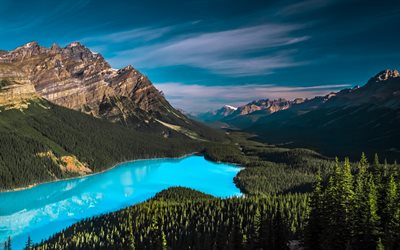 peyto lake, sommer, kanadische wahrzeichen, banff national park, wald, kanadische rocky mountains, mountains, nordamerika, kanada
