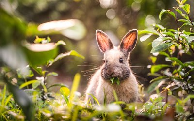 4k, rabbit in forest, bokeh, summer, cute animals, little rabbit, bunny, pets, rabbits, cute bunny