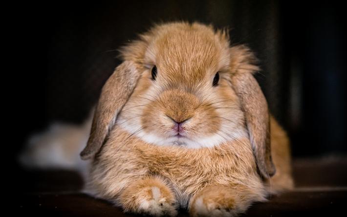 Mal- & Zeichenmaterialien für Kinder Süßes Kaninchen Spiel Deutsch 2017