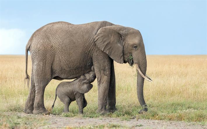 Telecharger Fonds D Ecran Des Elephants De La Famille De