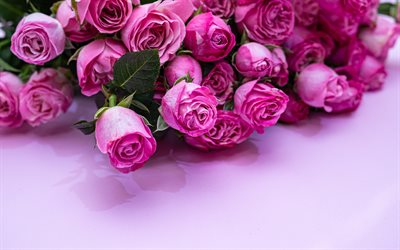 pink roses, pink floral background, bouquet of roses, pink flowers, roses