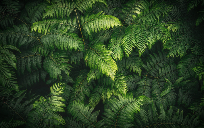 ferns leaves texture, green leaves texture, background with leaves, environment