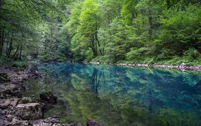 forest, blue lake, mountains, emerald lake, forest landscape, green trees