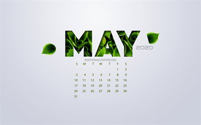 May 2020 Calendar, eco concept, green leaves, May, white background, 2020 spring calendar, 2020 concepts, 2020 May Calendar