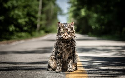 Pet Sematary, 4k, 2019 movie, cat, Horror