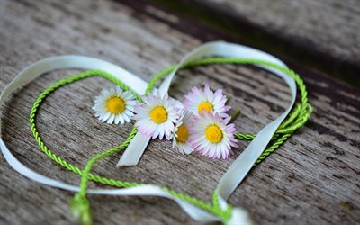 Valentines Day, heart silk ribbon, daisies, wooden background, creative heart