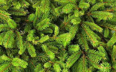 green fir-tree texture, 4k, christmas backgrounds, green fir-tree, fir-tree textures, fir-tree backgrounds, green xmas background