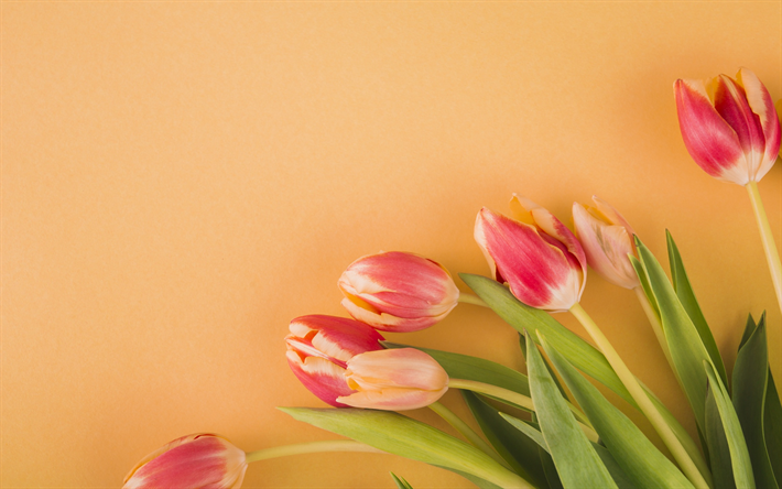 Download wallpapers pink tulips spring flowers spring orange pink tulips spring flowers spring orange background tulips mightylinksfo