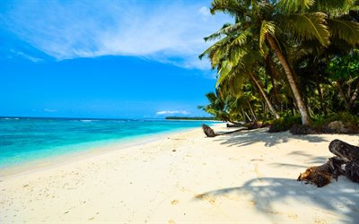 tropical island, ocean, beach, palm trees, white sand, summer travel