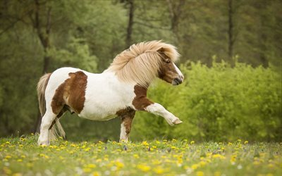 Pony, small horse, forest, green grass, cute animals, horses
