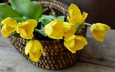 yellow tulips, flowers in a basket, yellow flowers, basket, tulips