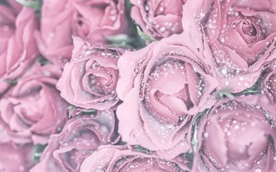 purple roses, rosebuds background, roses with water drops, background with purple roses, floral purple background, roses